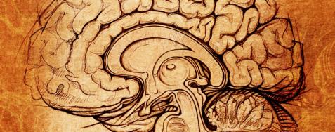 大腦.png