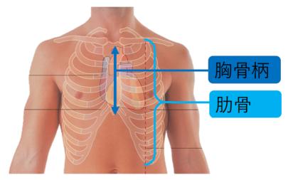 胸骨.png